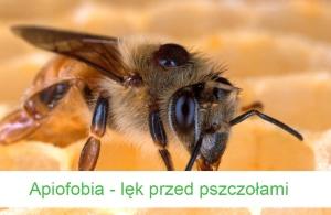 apiofobia lęk przed pszczołami