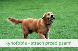 kynofobia strach przed psem