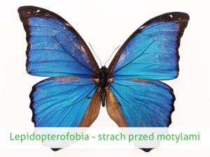 lepidopterofobia lęk przed motylami
