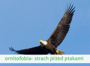 ornitofobia strach przed zwierzętami