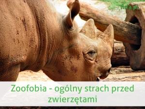 zoofobia to strach przed zwierzętami