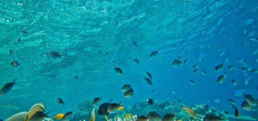 Kolagen rybi (morski)