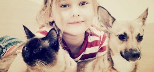 koronawirus u psa i kota